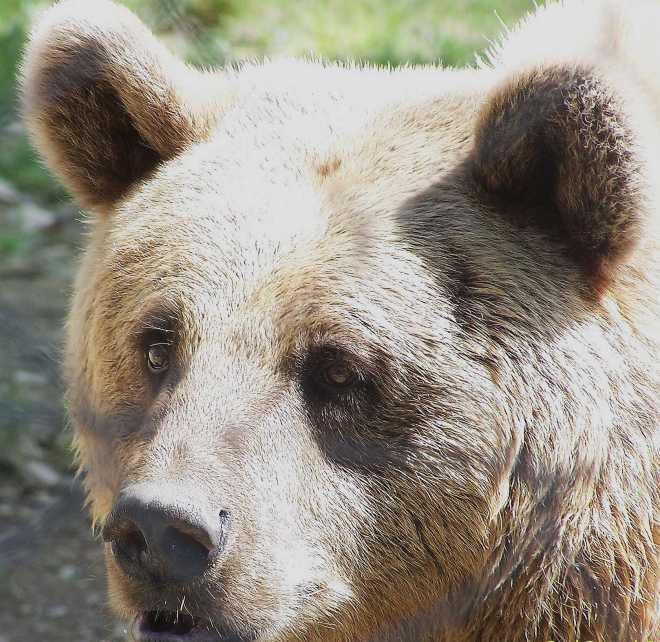 Bear_4508