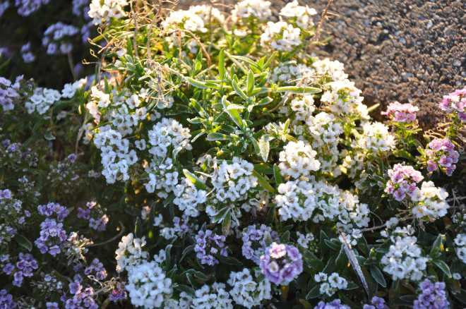 flowers_1814