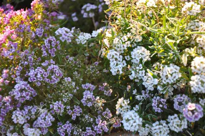 flowers_1815