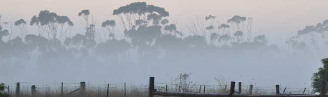 fog_1832