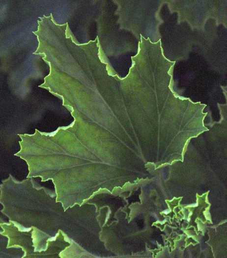 leaves_1790