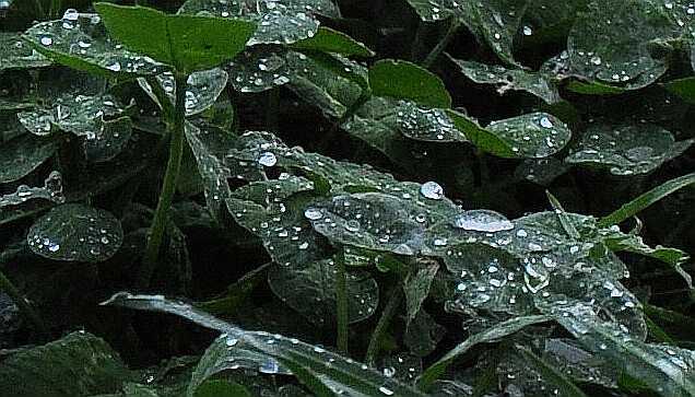 Rain_1771ab