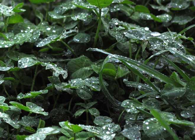 Rain_1772a
