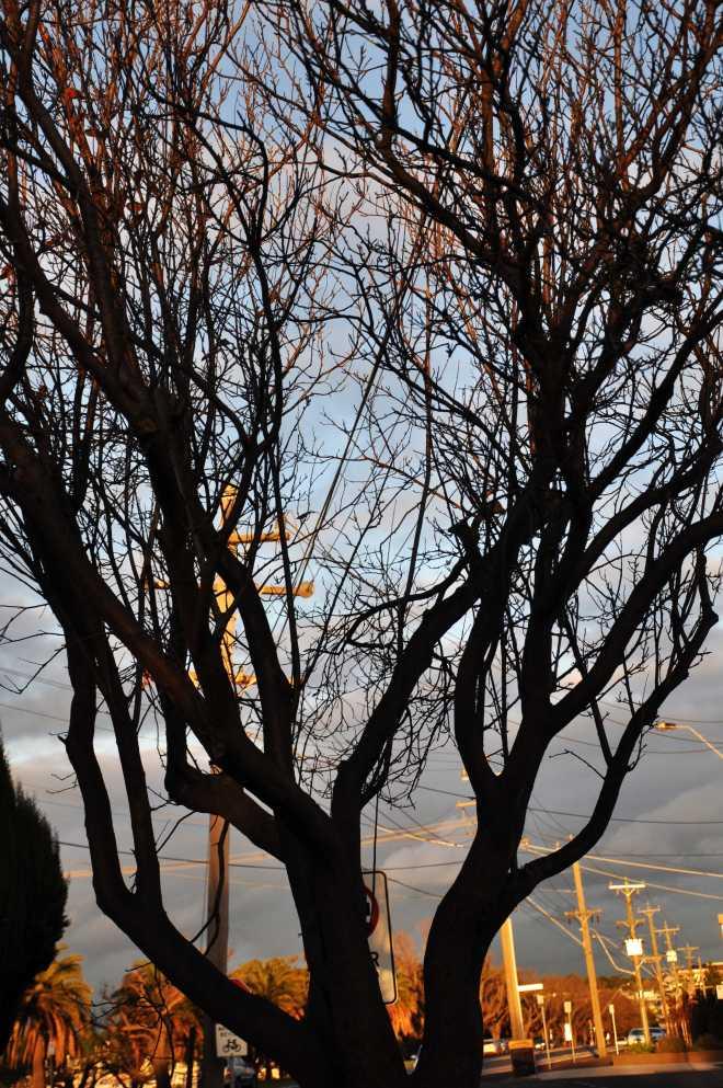 tree_1783