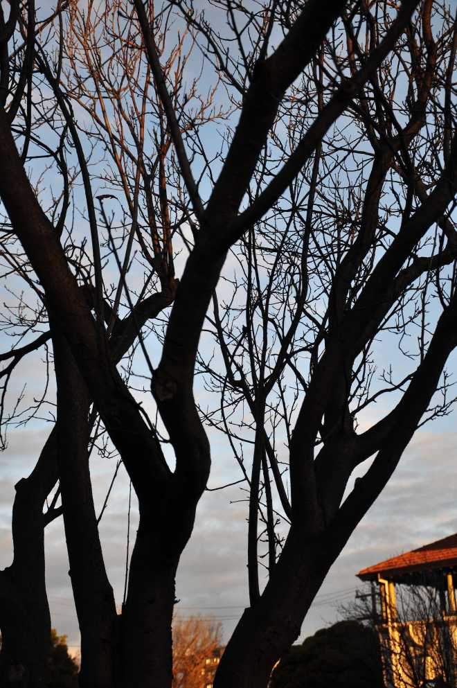 tree_1784