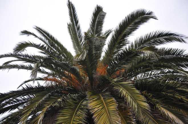 Palms_1946