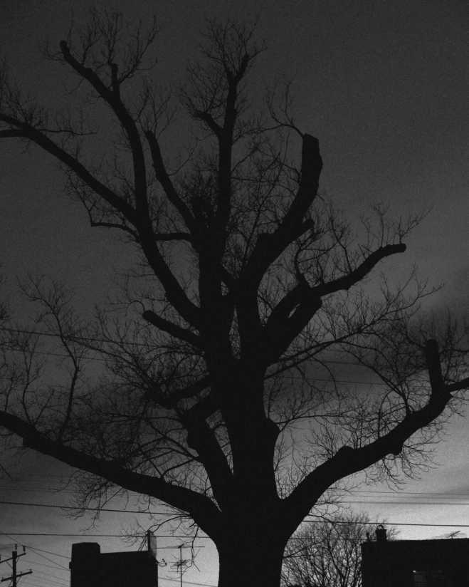 wintertree_1861BW