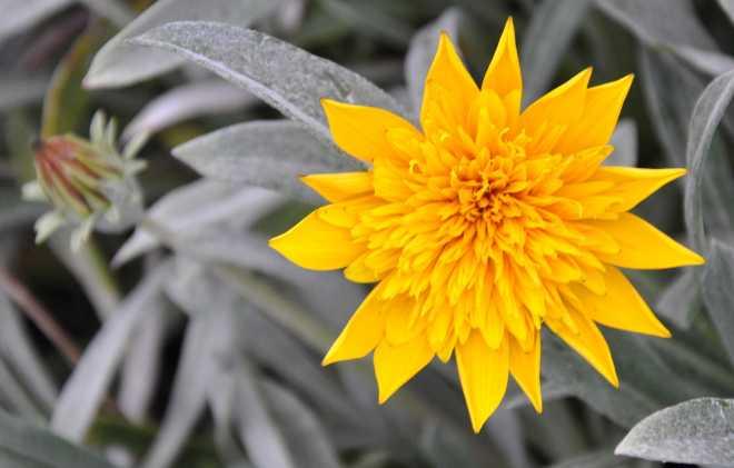 yellow_1907