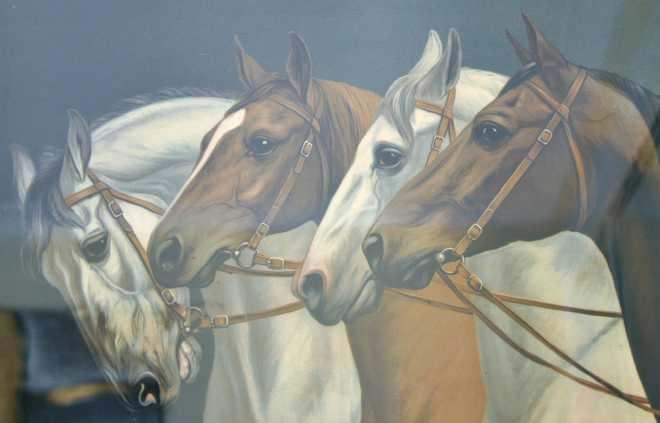 Equine_1852