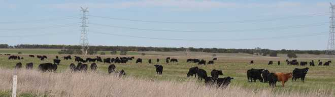 Herd_1968