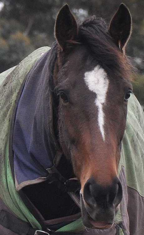 Horse_1856