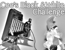 Black and White Photo Challenge