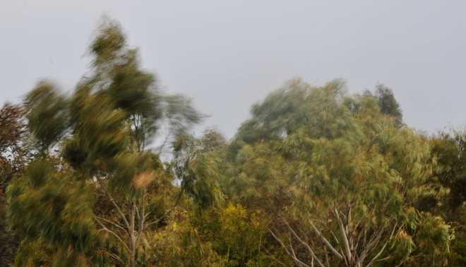 Trees_1873a