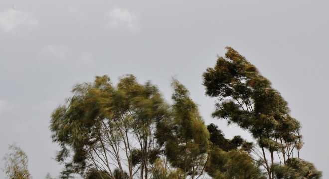 Trees_1874b