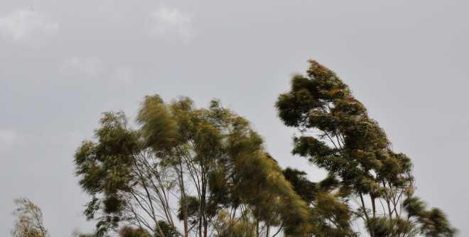 trees_1875c