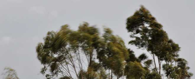 Trees_1876d