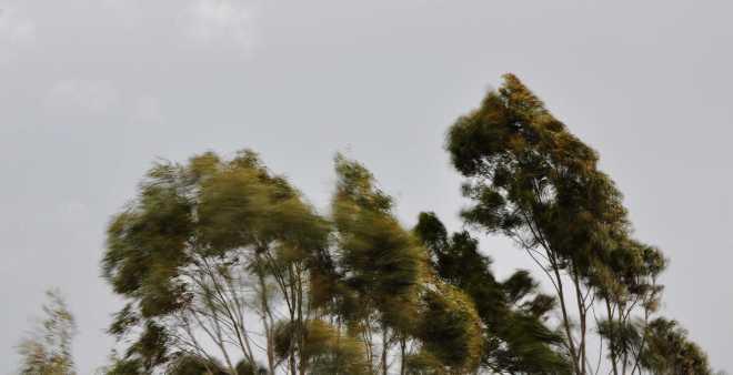 Trees_1877e
