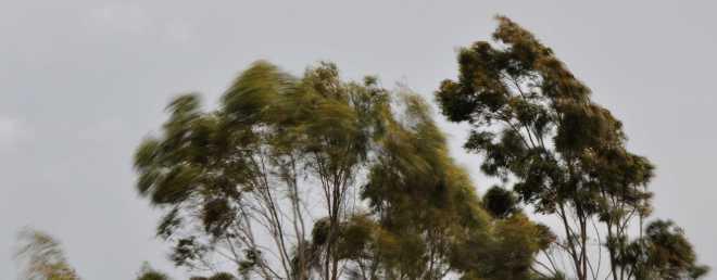 Trees_1878f