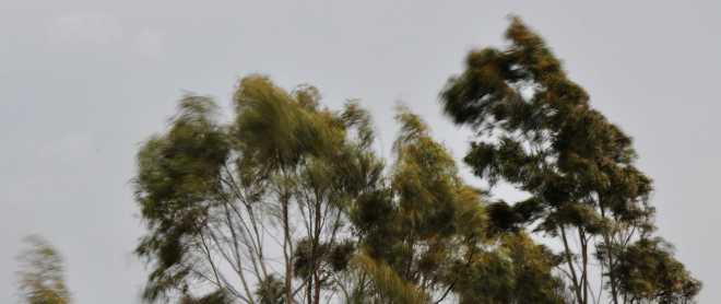Trees_1879g