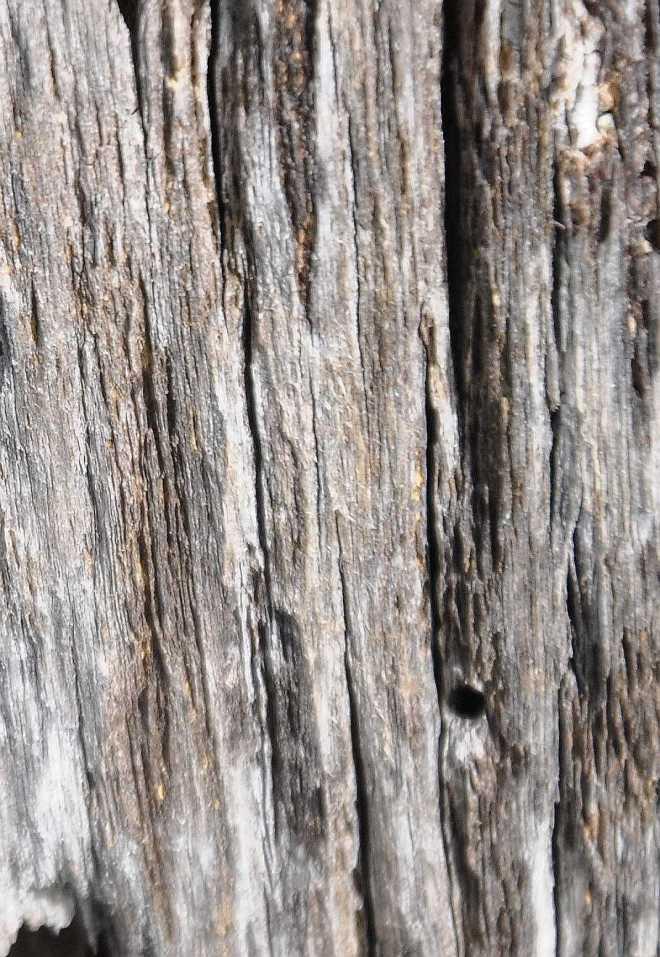 wood_1861