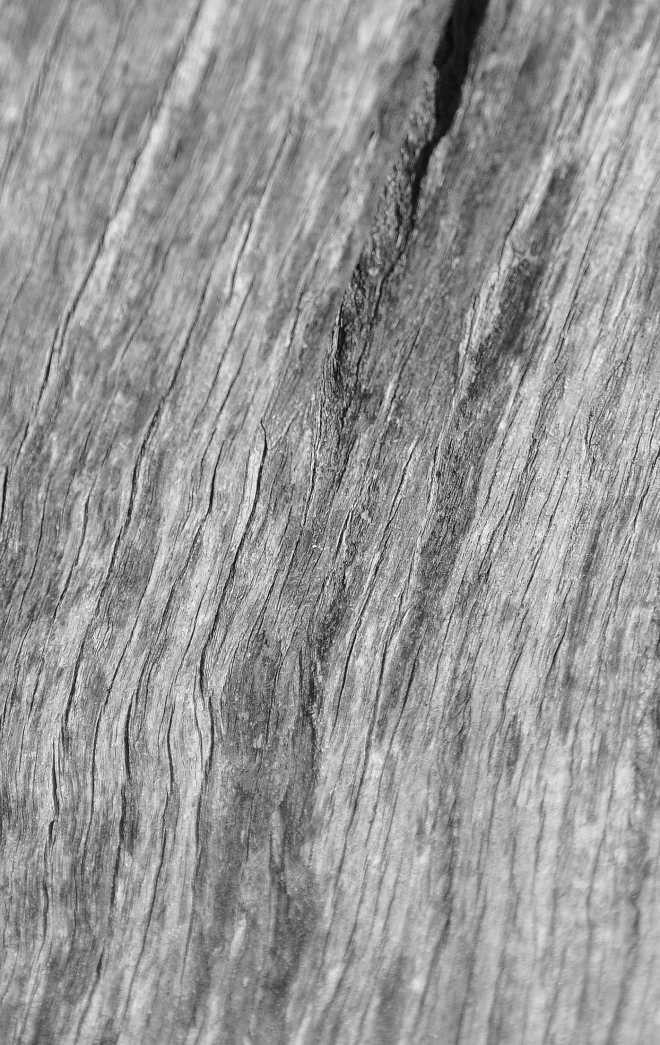 wood_1864-BW