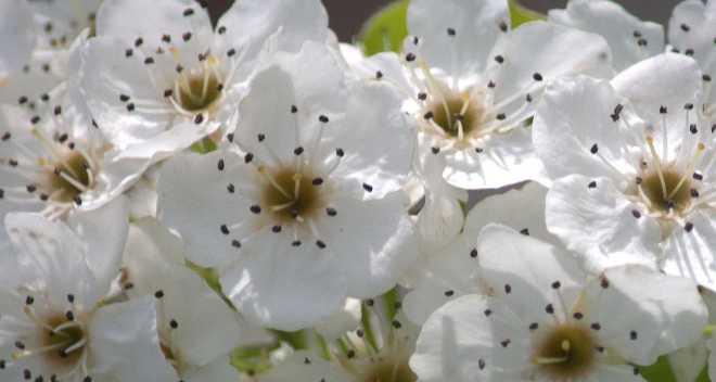 Blossom_0042