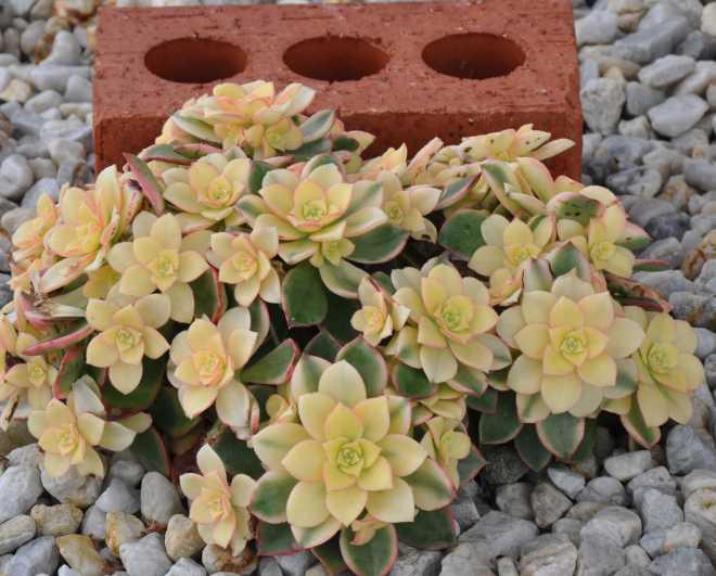 Cactus_0232