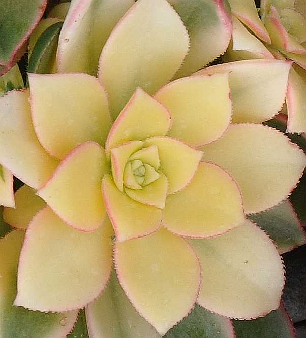 Cactus_0247c