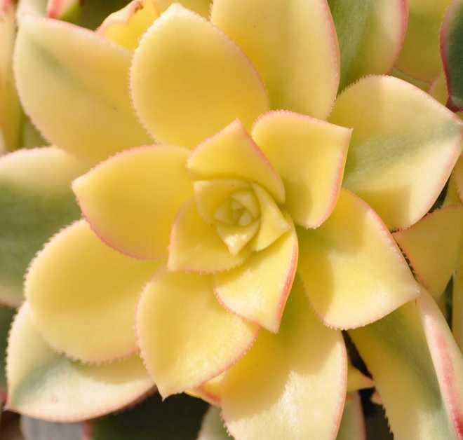Cactus_2001a