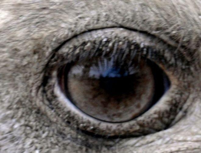 O_eye_0429c