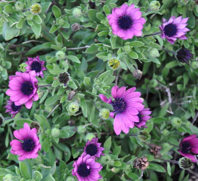 purple_1889