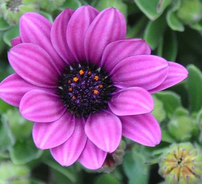 purple_1897