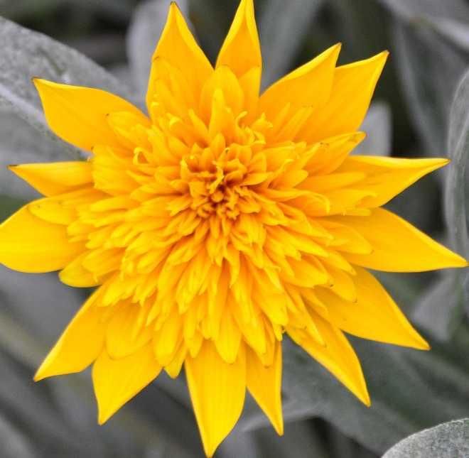 yellow_1906