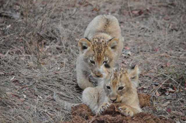 Cubs_0712b