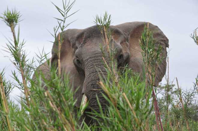 Elephant_0181b
