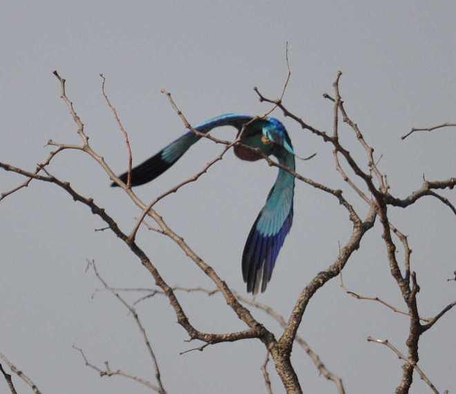 bird_0160a