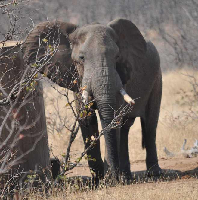 elephant_0109b