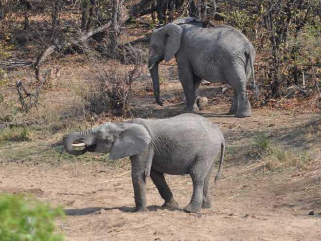 elephant_0168a