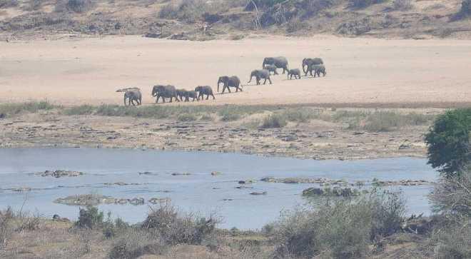 elephants_0403c