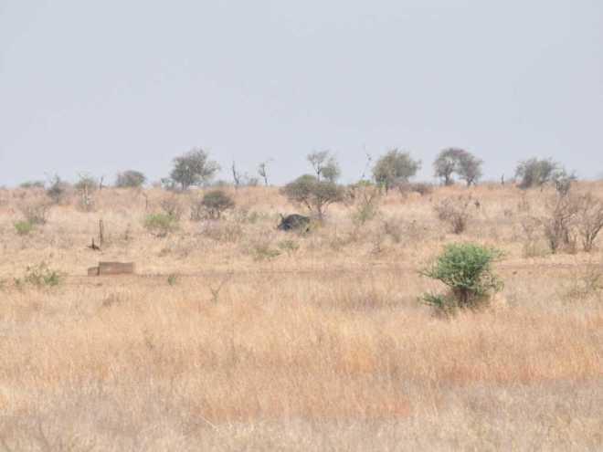 Rhino_0505a