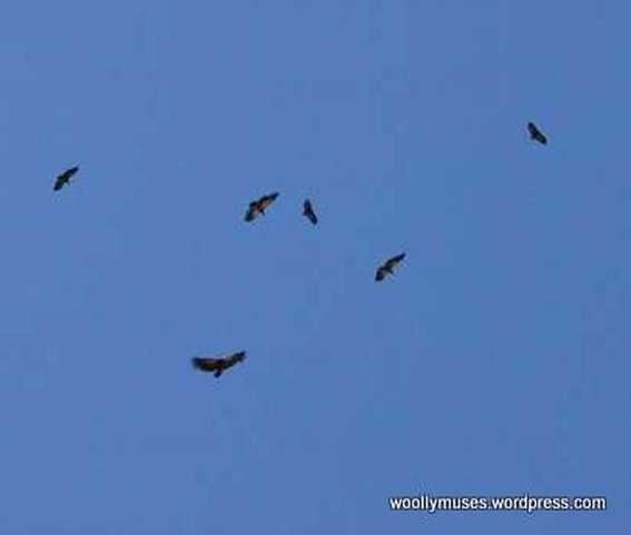 birds_0169a