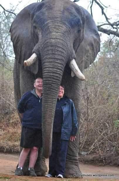 elephant_0385b