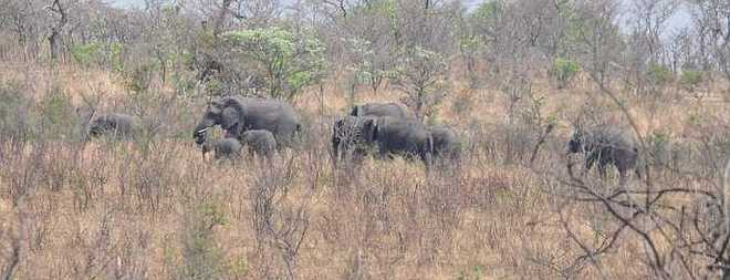 elephants_0325a