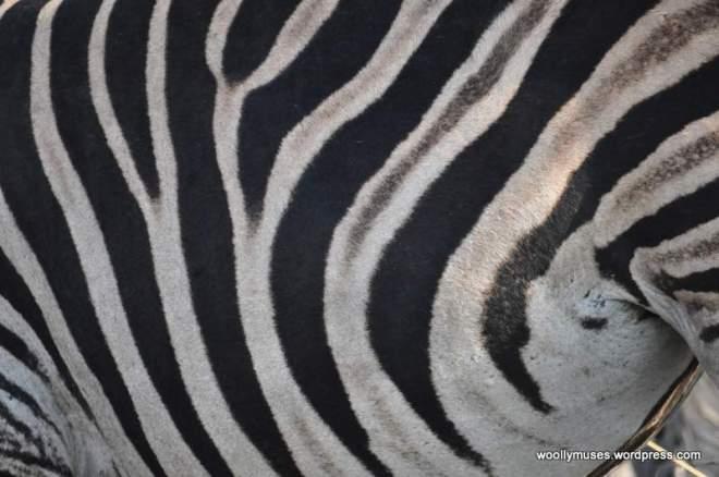 zebra_0047a