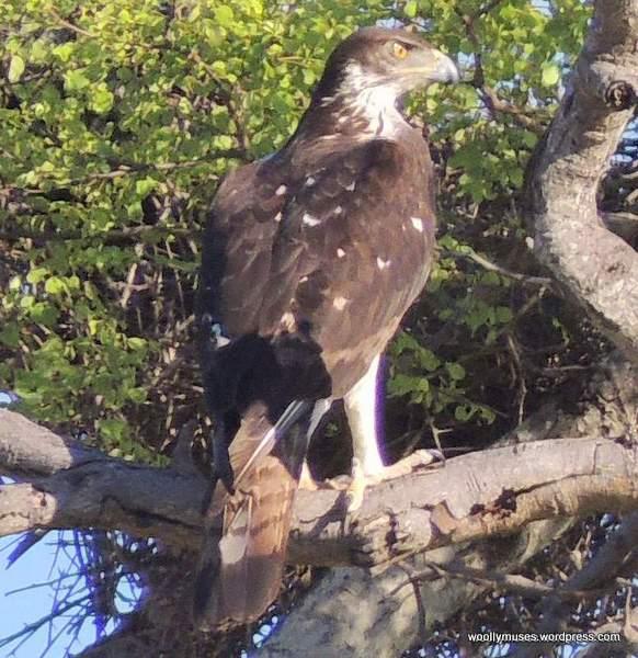 eagle_N1292