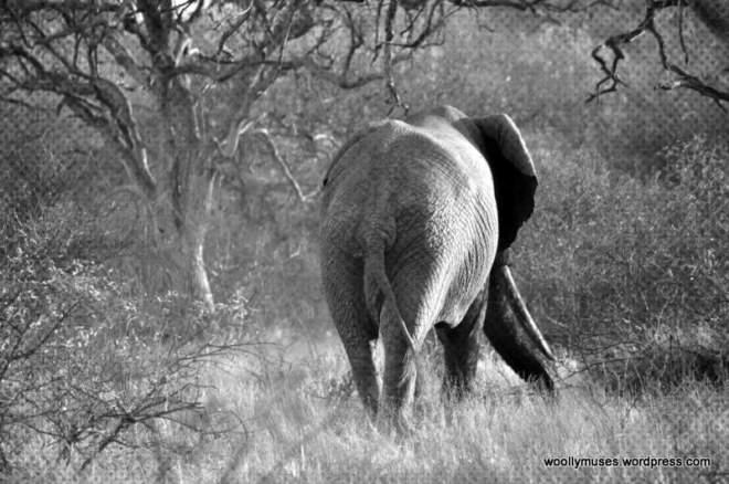 elephant_0073