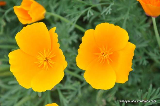 flower_0331
