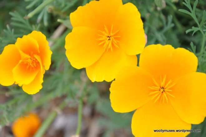 flower_0333
