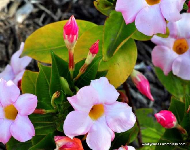 flower_0453