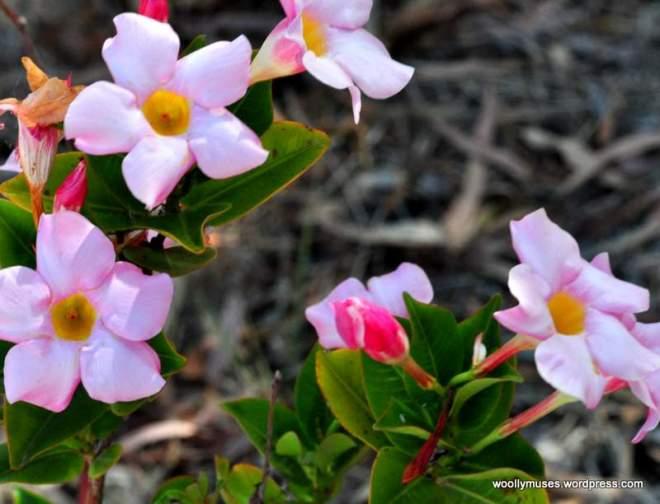 flower_0454